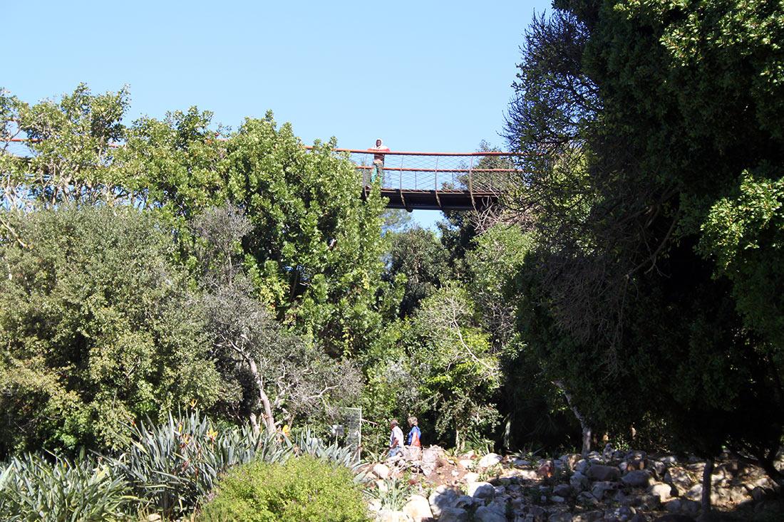 дорога над деревьями