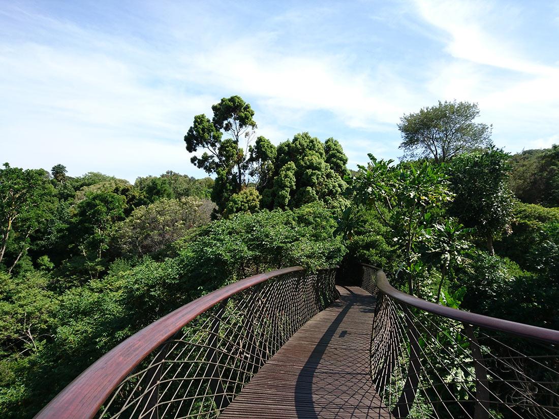 Дорога над деревьями в ботаническом саду Кирстенбош