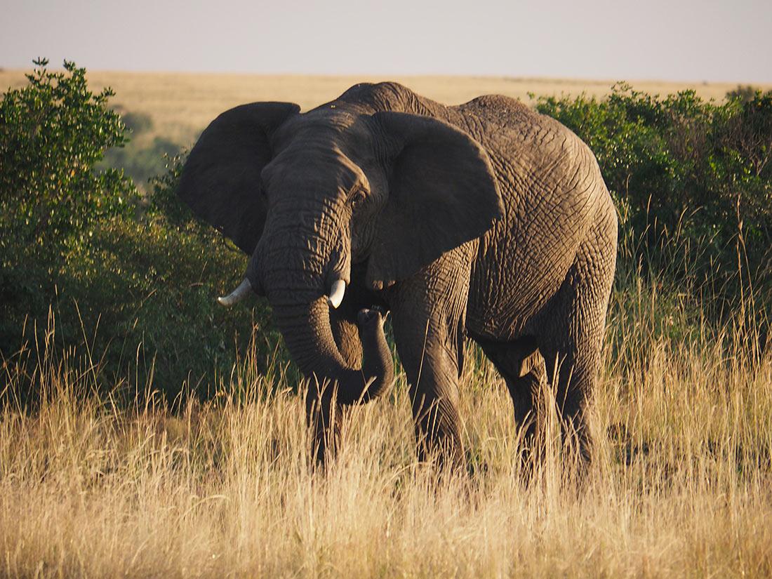 Парк слонов в Найсне