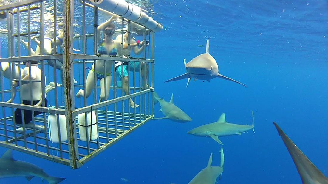 Подводное плавание с акулами