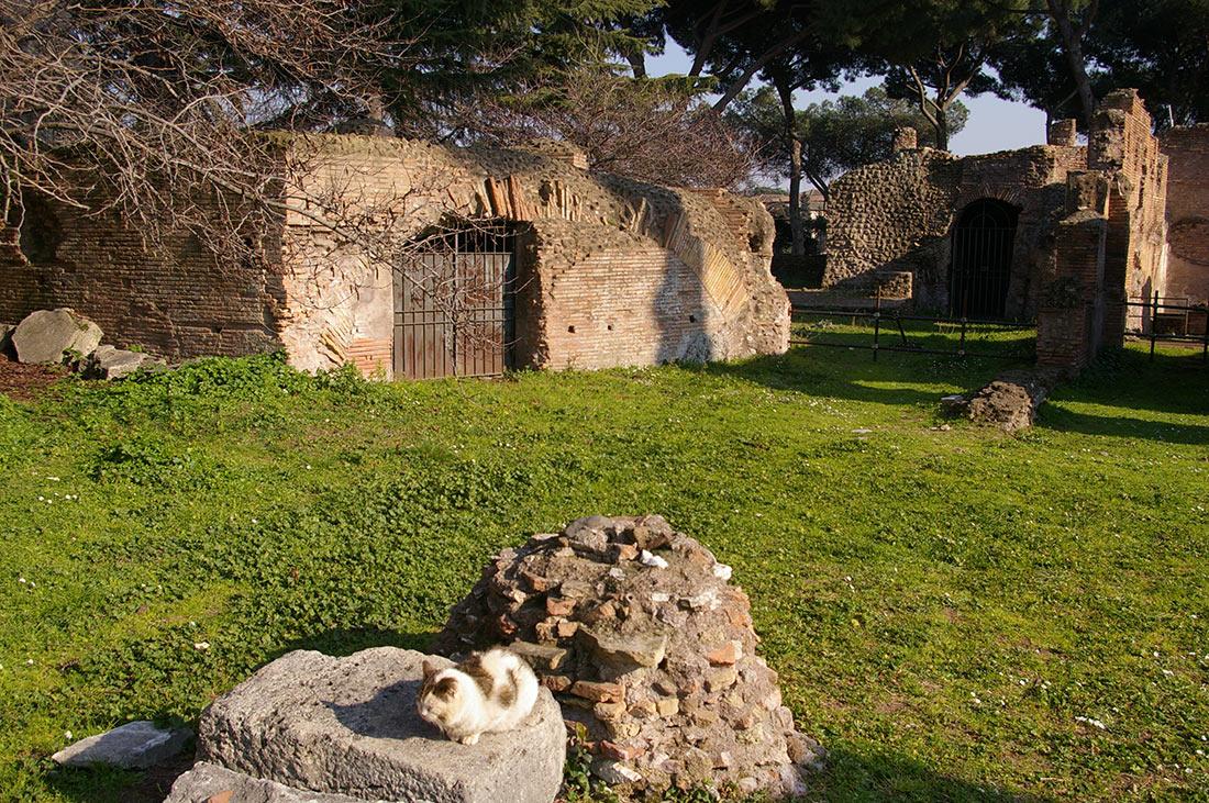 римские коты