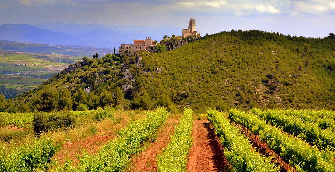 путешествия для любителей вина