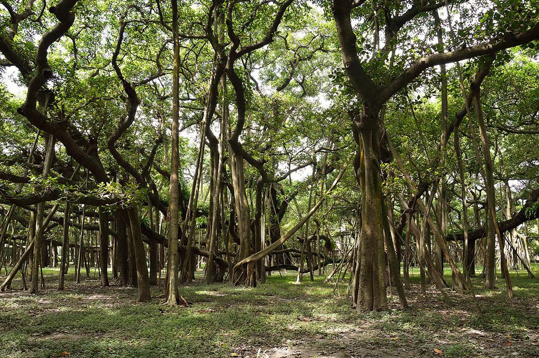 Ботанический сад Калькутты