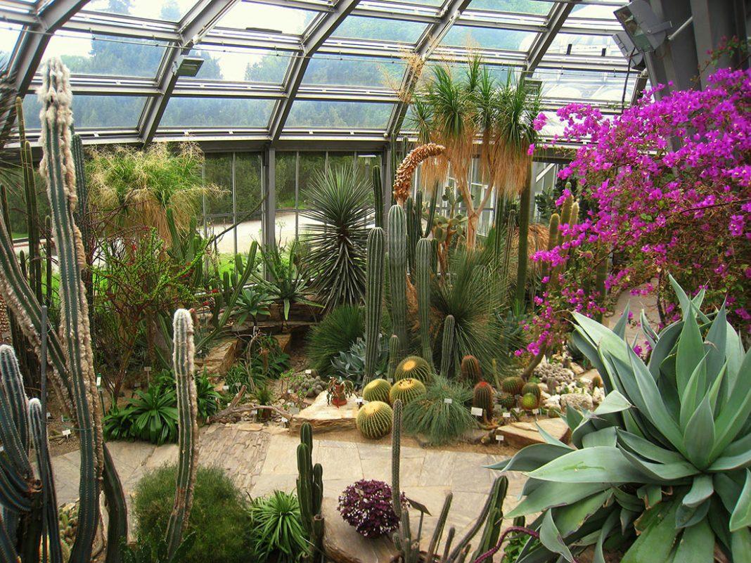 Купить цветы главный ботанический сад, цветов