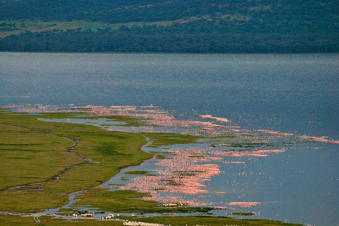 Озеро Накуру