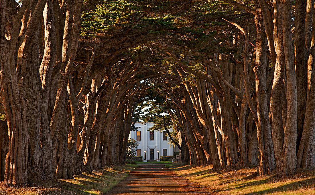 Кипарисовый «Тоннель из деревьев»
