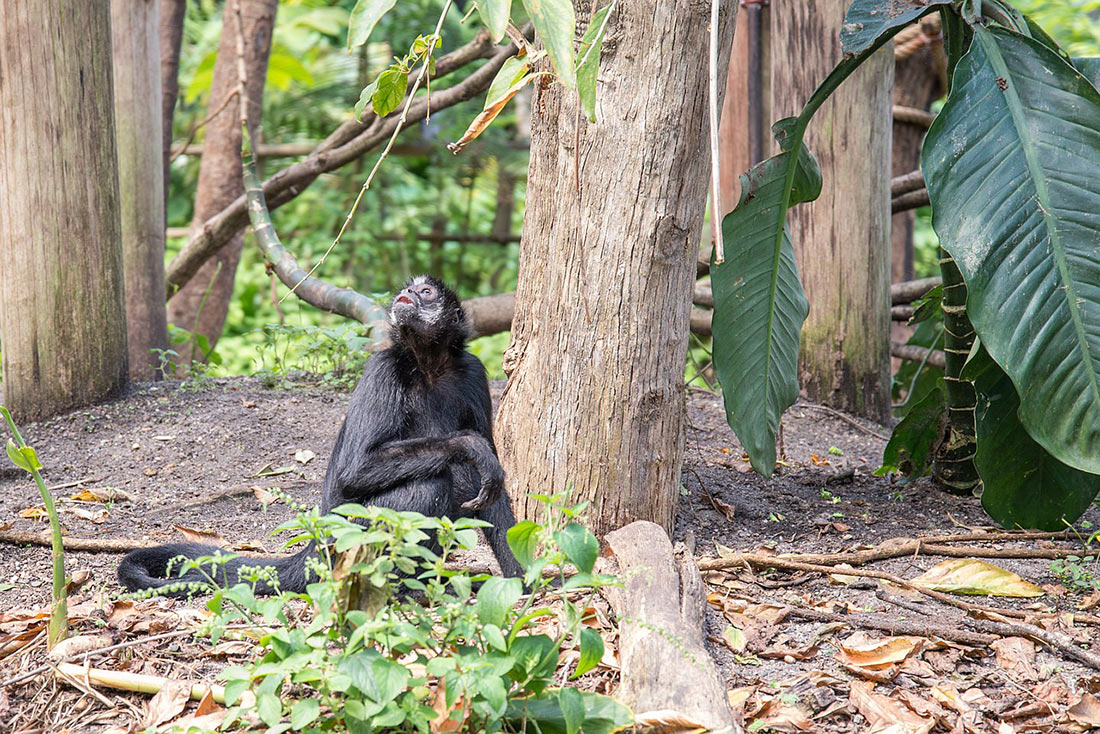 Тропические леса Конго