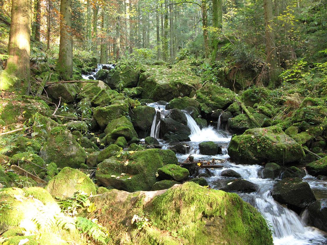 Национальный парк Шварцвальд