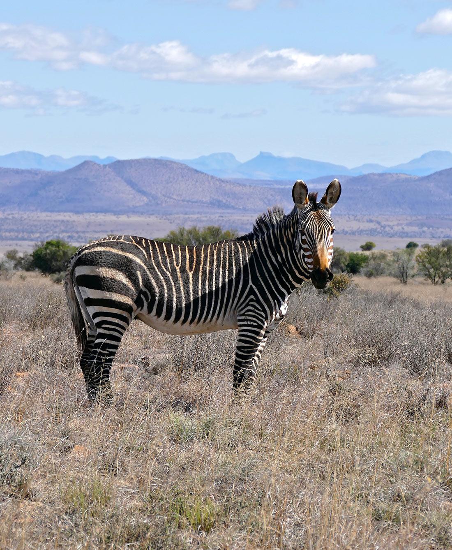 Национальный парк Горная зебра