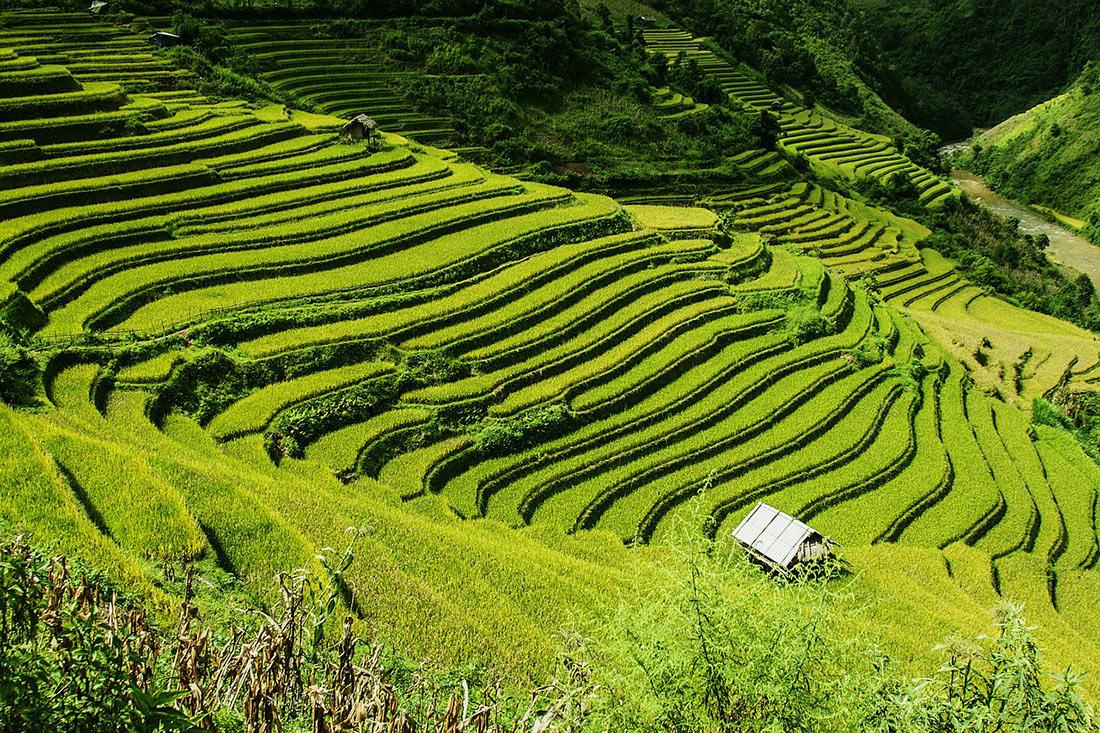 Рисовые террасы в Му Кан Чай