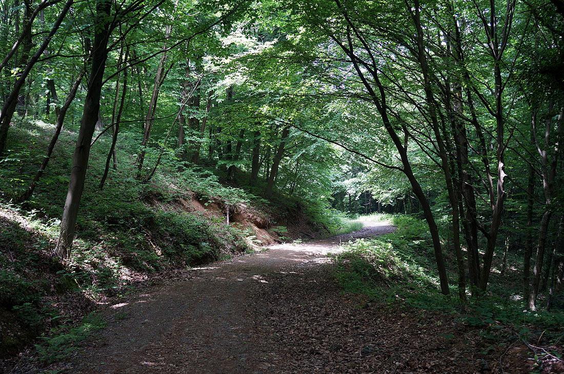 Белградский лес