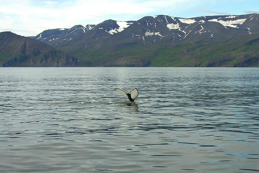 Наблюдение за китами в Хусавике