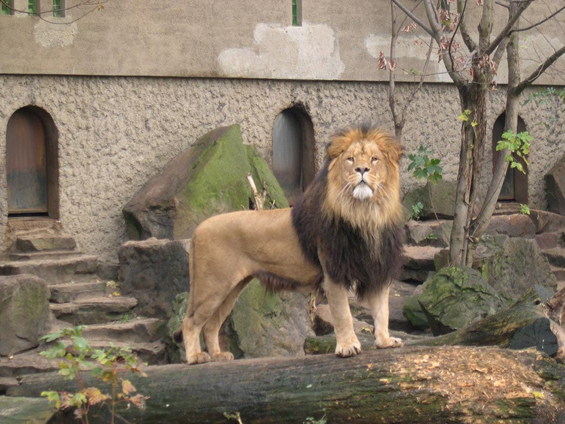 Зоопарк Артис в Амстердаме