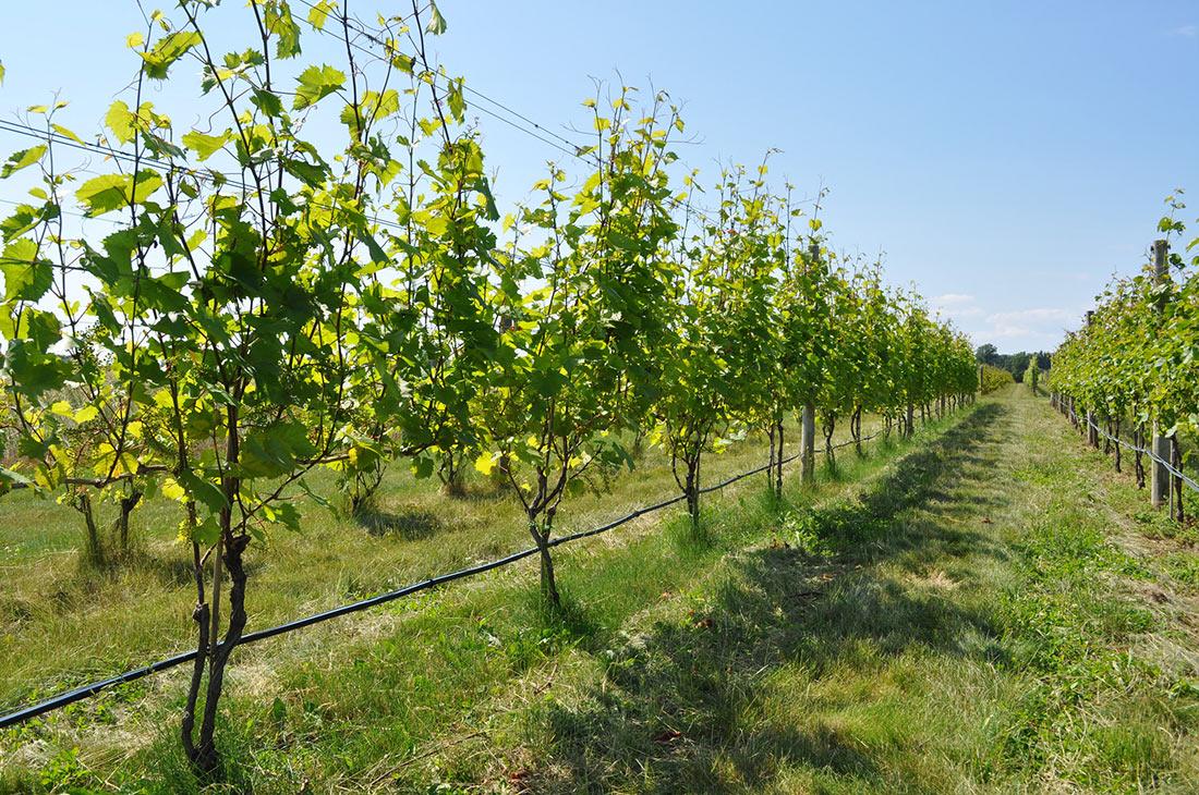 Винодельни на Лонг-Айленде