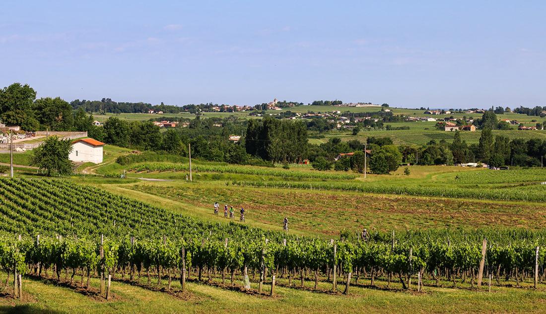 Винный регион Бордо