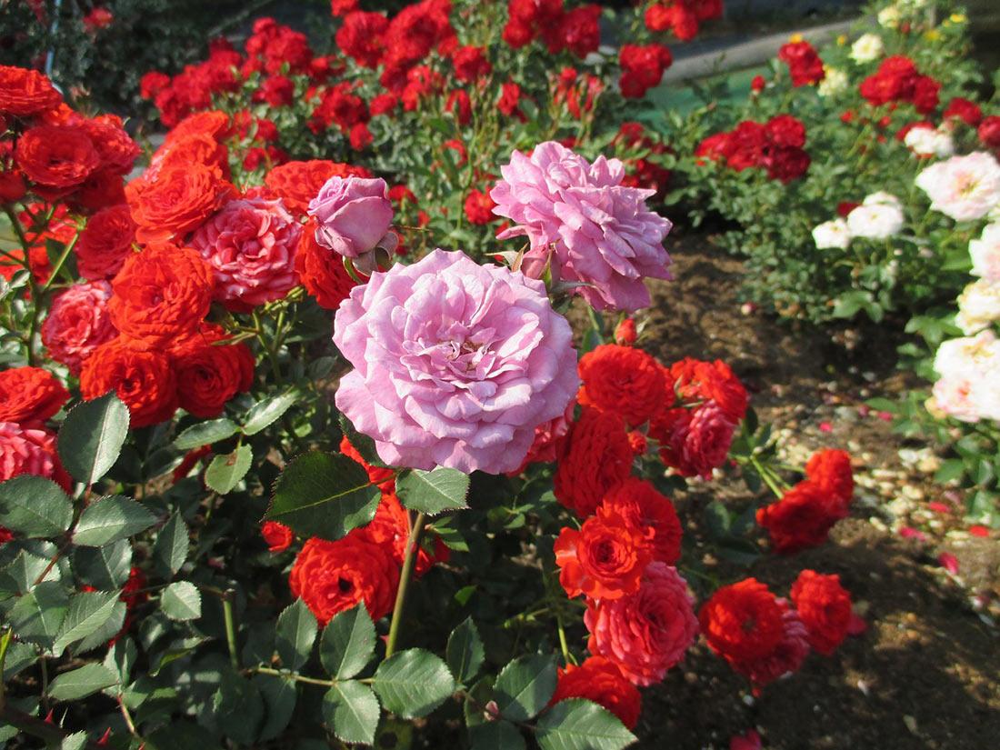 Тайская деревня Розовый сад