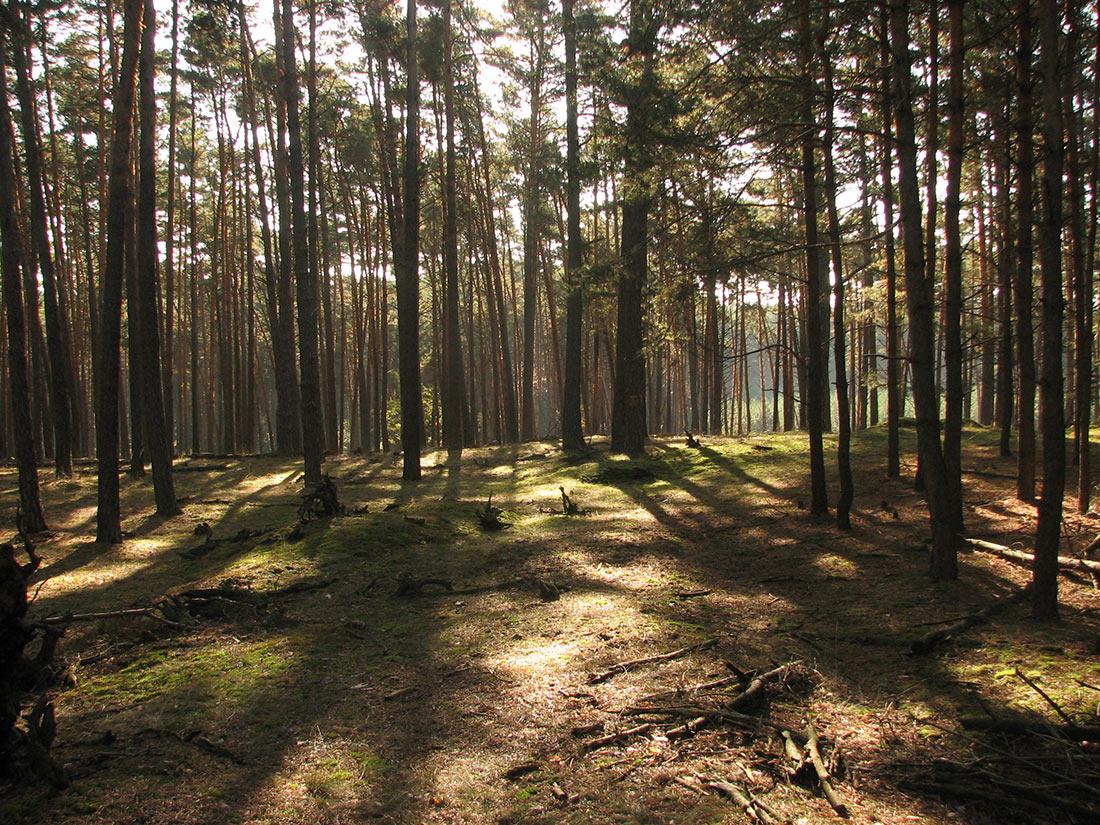 Ландшафтный заповедник Загорье