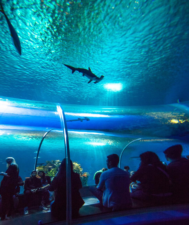 Национальный аквариум Дании