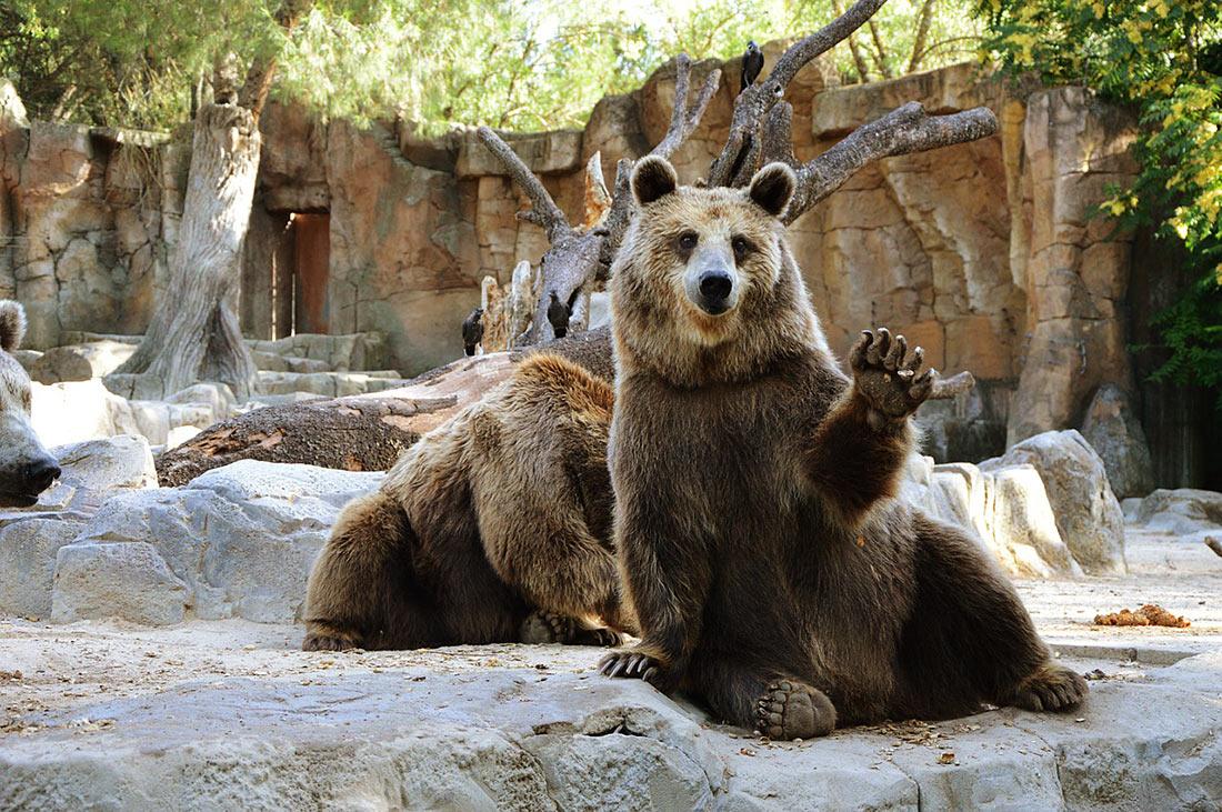 Мадридский зоопарк