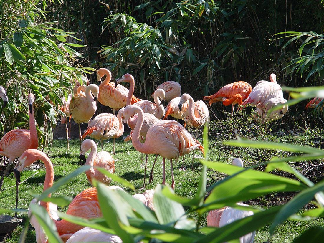 Зоопарк Ганновера