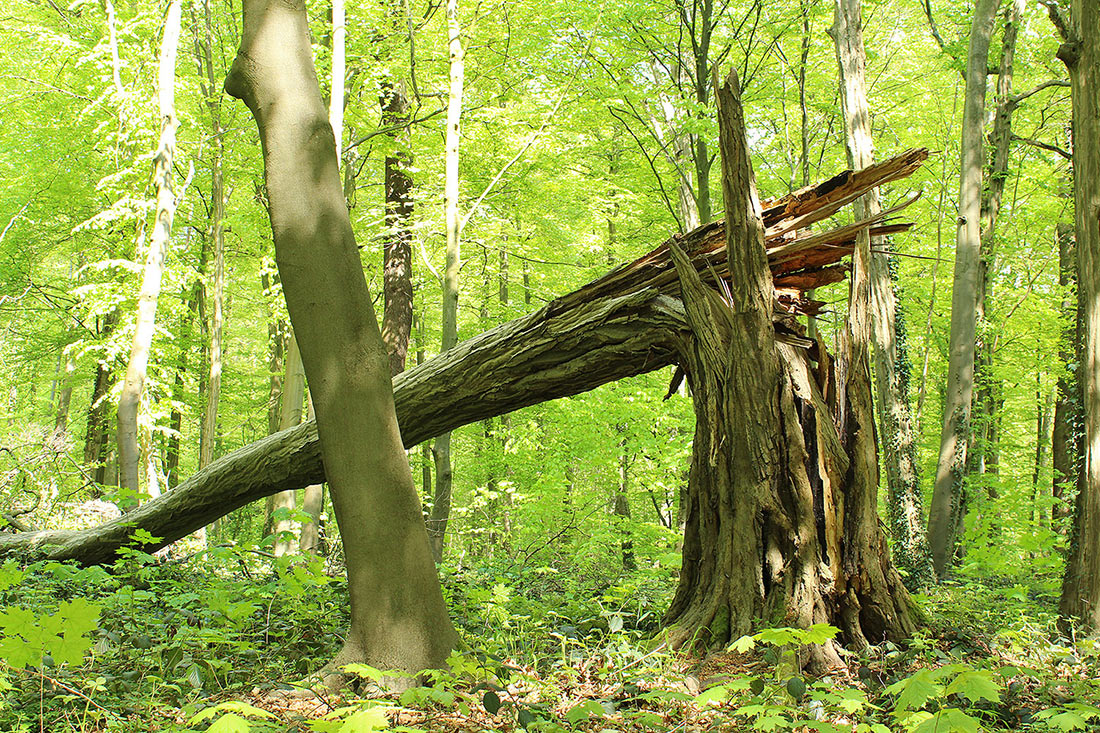 Городской лес Айленриде