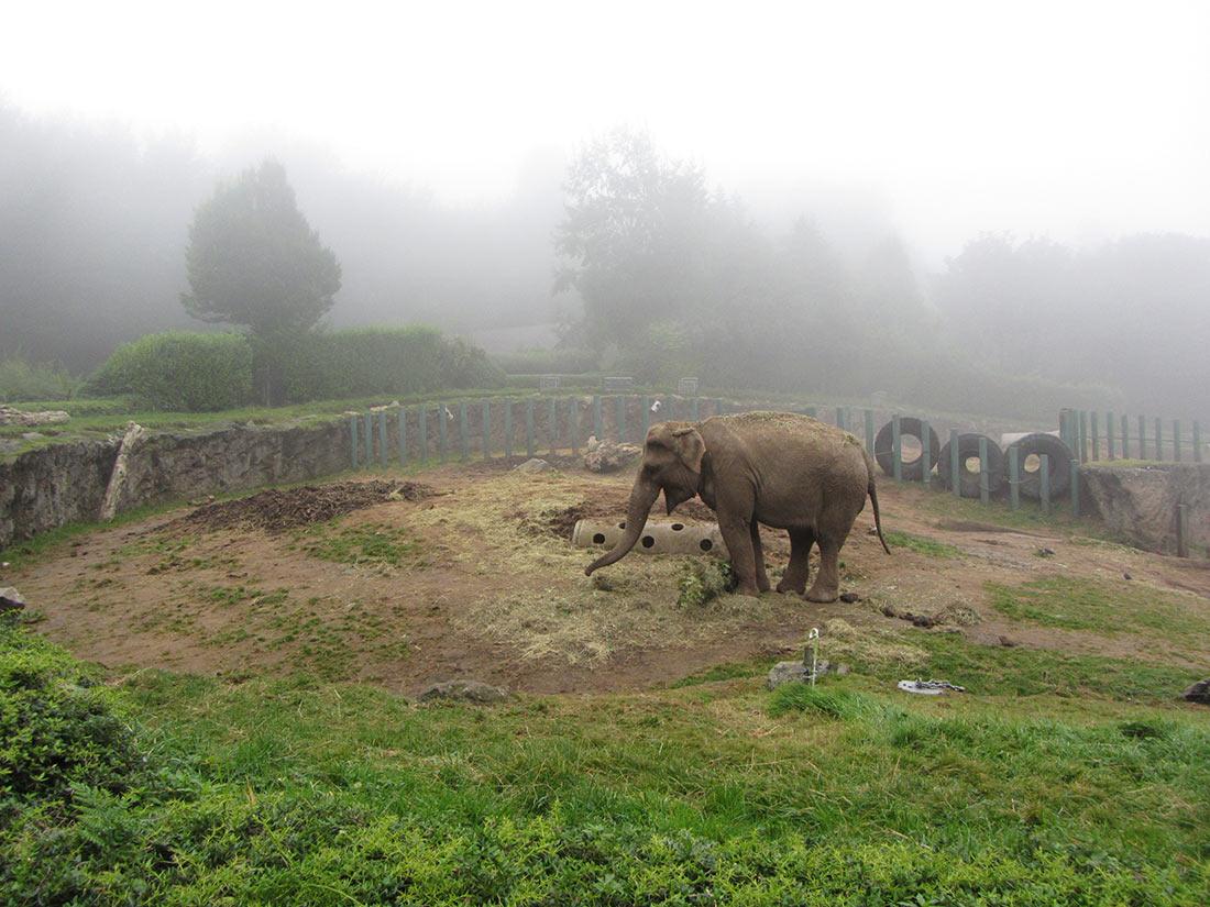 Зоопарк Белфаста