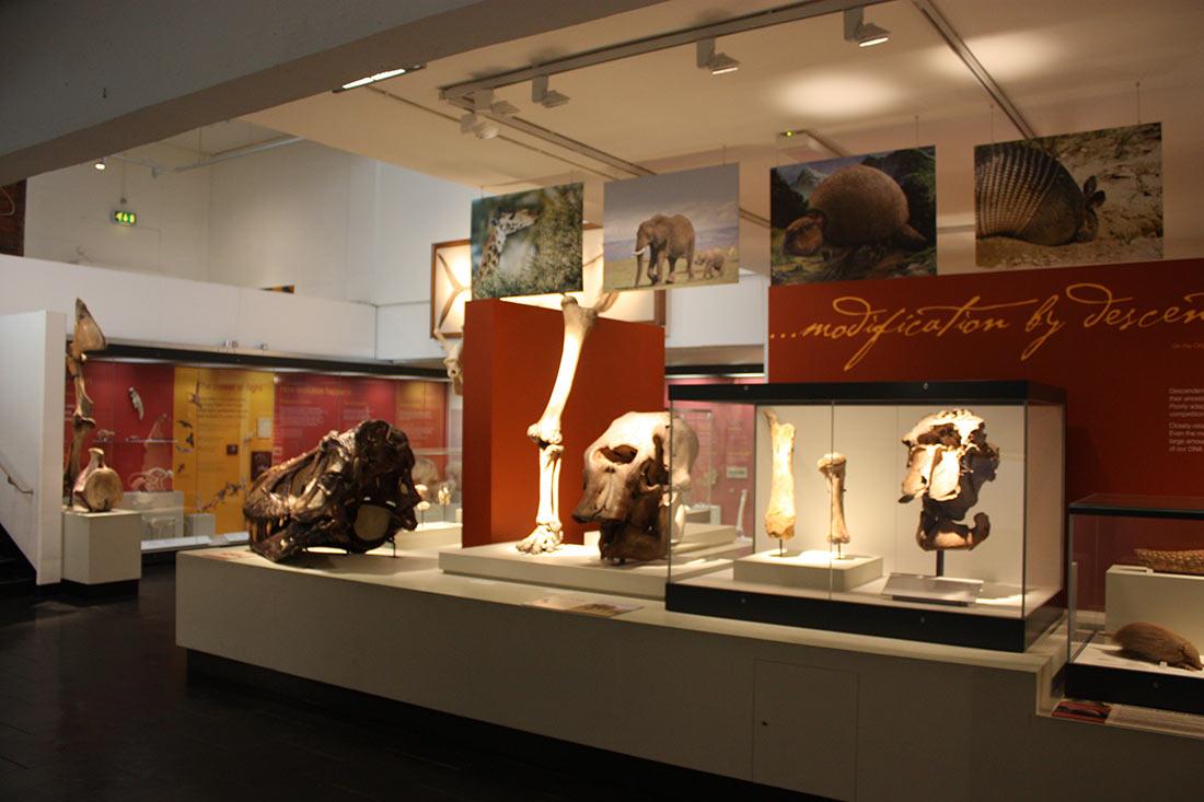 Музей Ольстера
