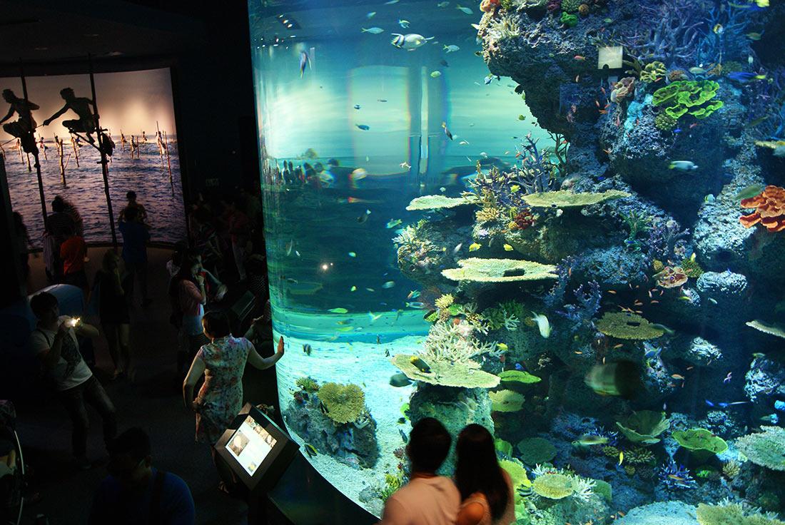 Достопримечательности Сингапура: Морской аквариум