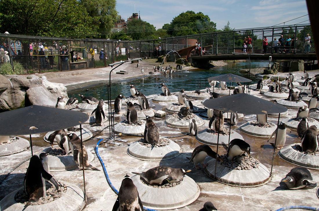Эдинбургский зоопарк (Edinburgh Zoo)